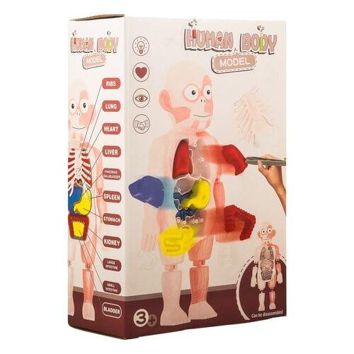 Human Body Model игрушка оптом